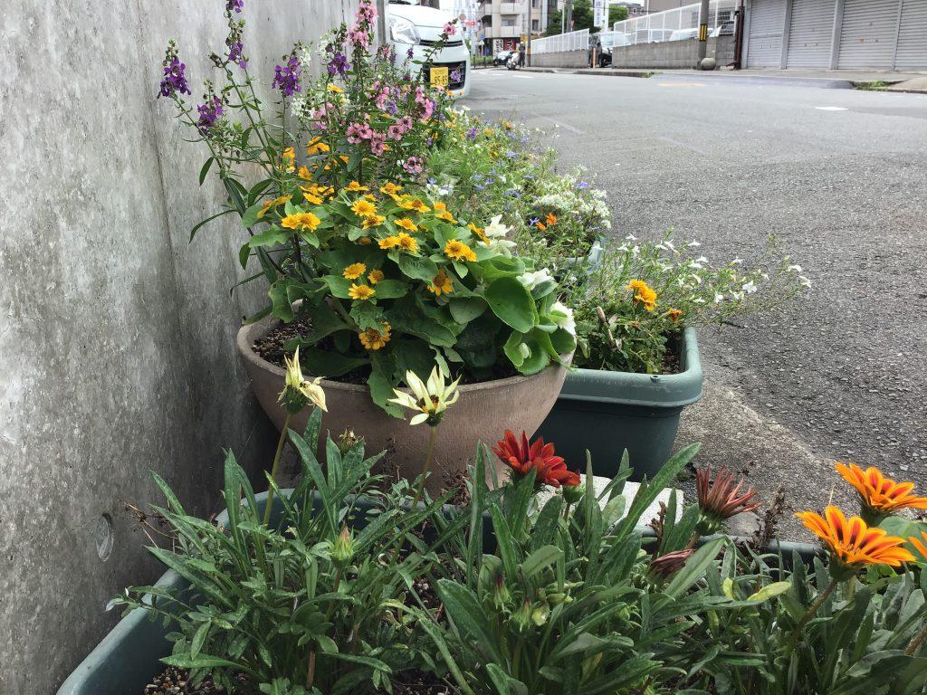 花のお便り🌻🌼🌹
